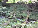 Potok pod Petrovým mostkem.