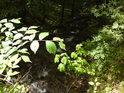 Světelný rozdíl mezi Sluncem zalitým listím a tím zastíněným je značný, potok však teče, kudy je nejmenší odpor.
