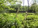 Kopřivy činí přístup k levému břehu řeky Moravy takový zajímavější.