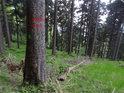 Vnější hraniční znak chráněného území na smrku v horní části chráněného území.