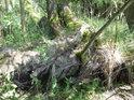 Vrbové kořání napovídá, že voda v Býkovickém rybníce není na svém stavu.
