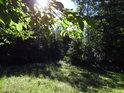 Sluneční paprsky na okraji lesa za bukovým listím.
