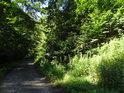 Lesní cesta od Betléma na Klokočí.