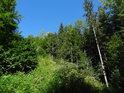 Křovím zarůstající lesní průsek.