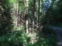Potůček mezi lesem a cestou z Klokočí na Podloučky.