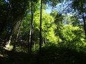Sráz s bukovým lesem.