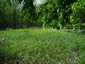 Ostrůvek s ostrou lužní trávou.