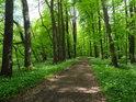 Lužní cesta v sytých zelených jarních barvách.