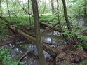 Násobné lávky z padlých kmenů přes svodnici z rybníka Podhorník.