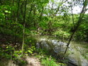 Pravý břeh svodnice z rybníka Podhorník.