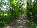 Lužní cesta lemovaná menšími stromy.