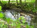 Jeden z mnoha náhonů na rybníky v okolí Polanky nad Odrou.