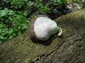 Nádherně vybarvená dřevokazná houba na padlém kmeni.