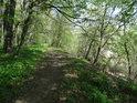 Lužní cesta podél levého břehu řeky Odry.