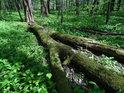 Typický charakter Polanského lesa.