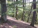 Buky a duby těsně pod horní hranou na severu rezervace.