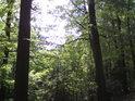 O tom, že svah je prudký, svědčí i klesající vrcholky stromů.