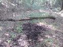 Pramen krátkého potoka.
