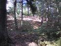 Konečně smíšený les.
