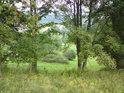 Mez, zpevněná stromy, vidět je jeřáb a javor.