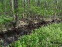 Malý, téměř nehybný vodní tok, obklopený jarní zelení luhu.