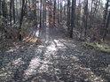 Chvílemi užívaná lesní cesta.