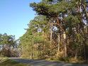 Pohled od jihozápadu na silnici Rokytno – Býšť, vpravo je pak přírodní rezervace.