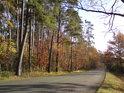 Převažuje bor, leč listnáče se zespoda hlásí též, což na podzim je dobře znát.