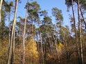 Mnohabarevný les.