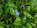 V pokročilém jaru je v lužním lese vždycky co k obdivování.