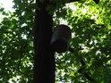 Sud tento zdá se býti jakýmsi polotovarem pro ptačí hnízdo.
