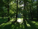 Ranní Slunce si nachází cestu mezi stromy v parku Střelnice.