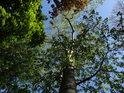 Čtvero barev listí ze čtyř druhů stromů, máme tu dub, jasan, habr a topol.