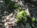 Sluneční ostrůvek v hustém porostu na vrcholu Hradiště u Habří.