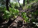 Málo prošlapaná pěšina po jižním hřbetu Hradiště u Habří, kam pronikají paprsky Slunce jen někdy.