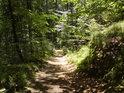 Cesta v severní části chráněného území.