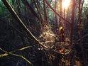 Pod Radobýlem je západ Slunce překrásný i v křoví.