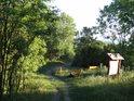 Odpočívadlo s lavičkami a informační cedulí na severní straně Radobýlu zalévá ranní Slunce.