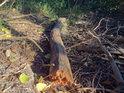 Ulomená větev větší na dně vyschlé tůně je obklopena větvemi menšími i listím.