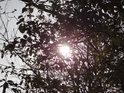 Prudké lužní Slunce za větévkami.