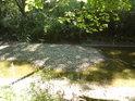 Osluněné levobřežní rameno řeky Moravy.