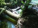 Strom, povalený přes levobřežní rameno řeky Moravy a jeho okolí v úžasných barvách.