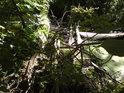 Naplaveniny na kmeni stromu, padlém přes levobřežní rameno řeky Moravy.