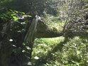 Vrba je velice houževnatý strom, po zlomení hlavního kmene záhy zapouští kořeny a čerpá živiny tímto způsobem.
