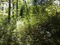 Jihomoravské luhy někdy připomínají středoevropskou džungli.