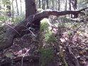 Jeden strom přes druhý padá, bývá vhodné krýt si záda.