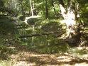 Národní přírodní rezervace nedaleko obce Lanžhot