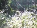 Sluncem zalité ustupující kopřivy s vodním tokem, říčkou Kyjovkou v pozadí.