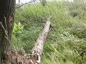 Na okraji lesa teče malý potůček.