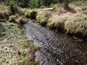 Vřesovištní potok má dno plné malých kamínků a voda lehce slatinnou barvu.
